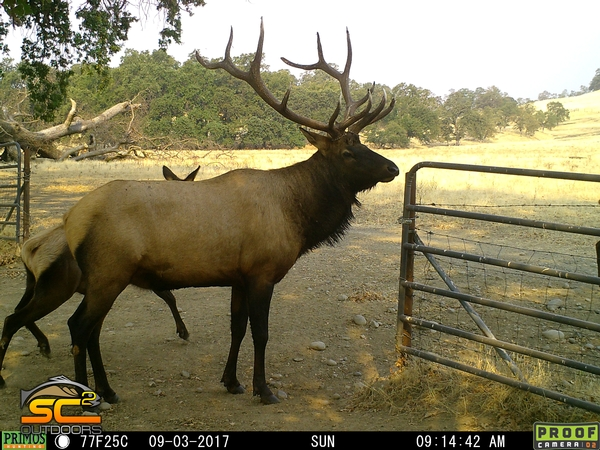 Donated 409 Apprentice Rocky Mountain Elk Hunt Northeastern California