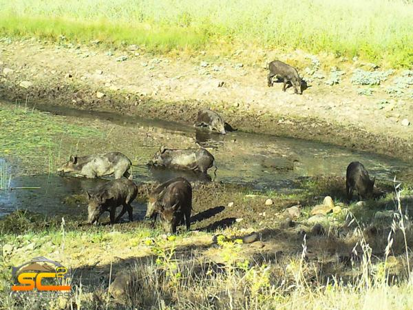 2019 Pig Hunting in California with Boar Hunting maps ...
