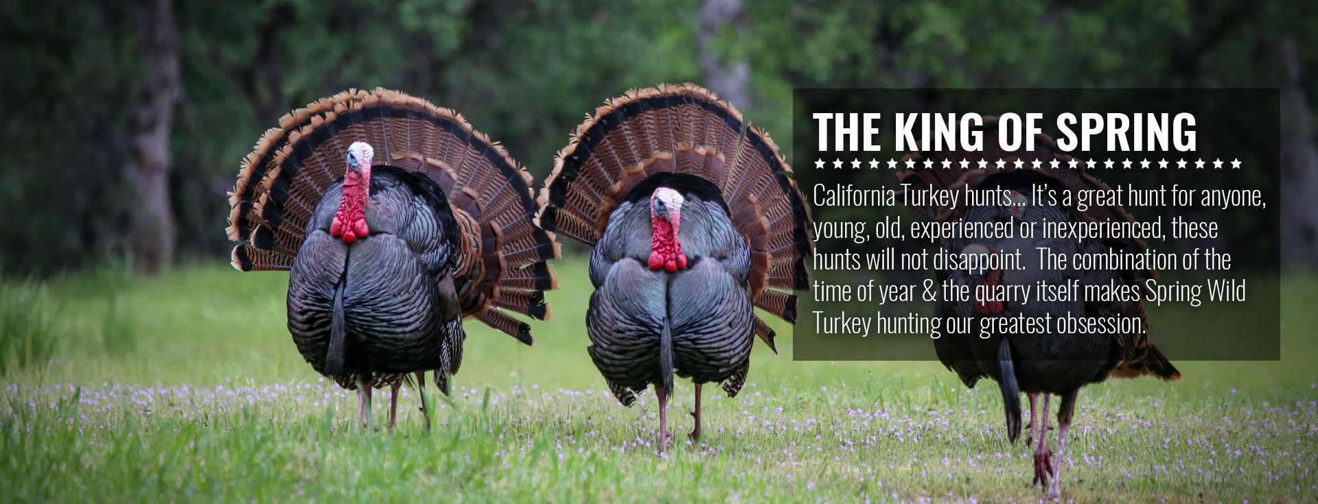 Wild Turkey Hunting Northern California with SC2 Outdoors